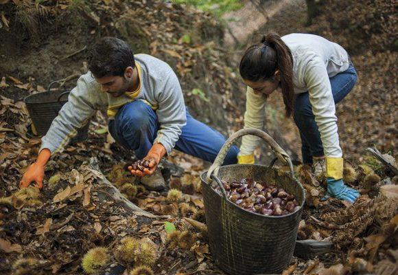 Evita la deforestación de la Amazonia