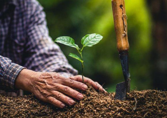Frena la desertificación plantando un árbol