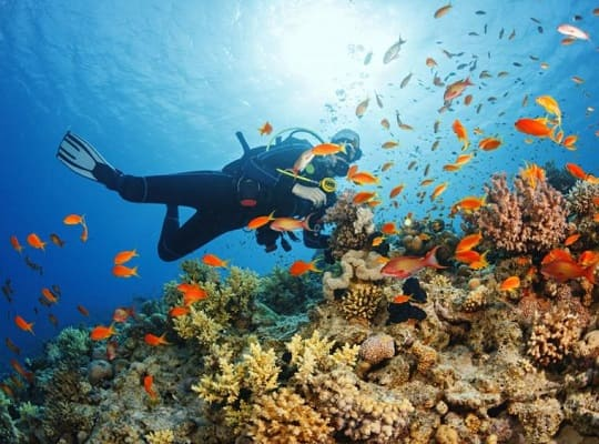 Salvemos los Corales de la extinción