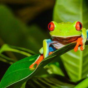 5 gestos por la biodiversidad
