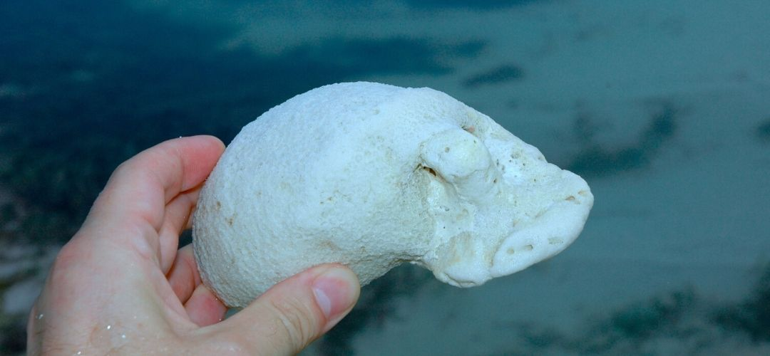 Sindrome blanco corales
