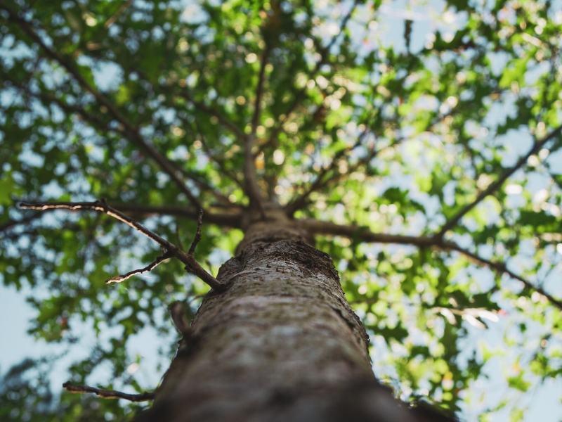 Curiosidades de los árboles
