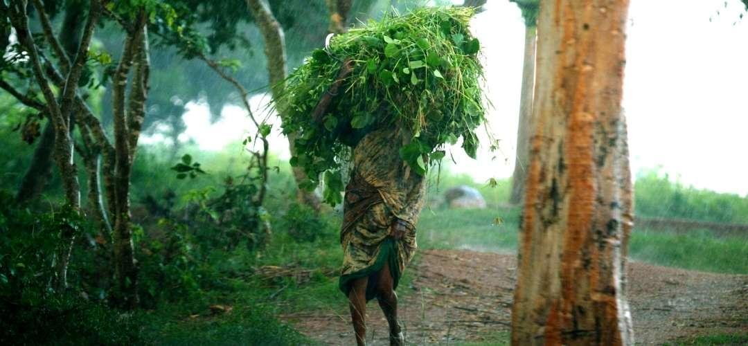 Proyecto evitar desertificacion