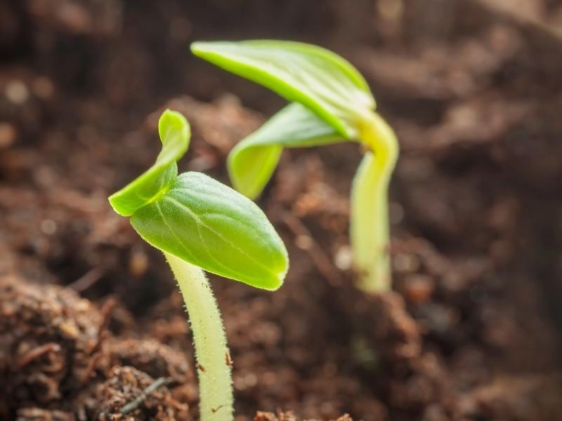 Empieza tu propio huerto de germinados