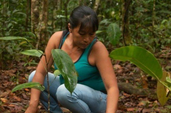 ¡Conoce  Saving The Amazon!