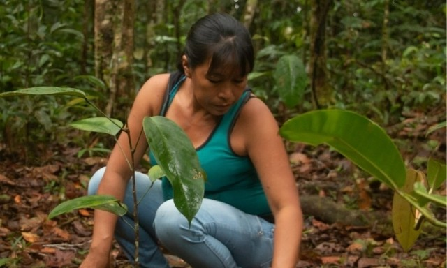 ¡Conoce  Saving The Amazon!